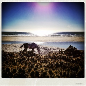 Horse at the beach of Bolononia