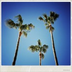 Palmtrees and blue sky – that's what we came for